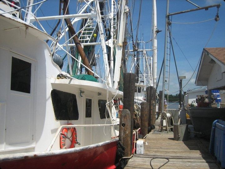 shrimp boats at the docks
